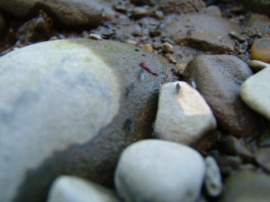 stenen in de zomer.